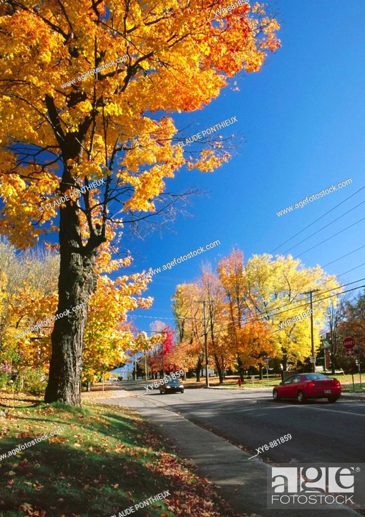 Stock Photo: Street-Cars-Trees.