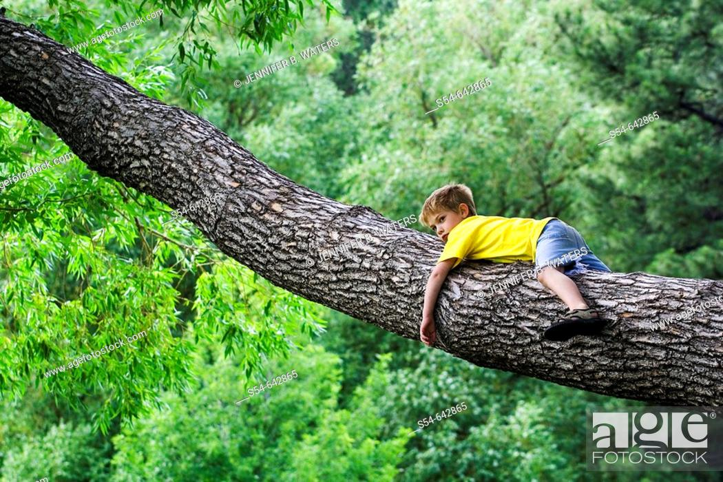 Stock Photo: A caucasian boy, 5-10, rests in the branch of a large tree.