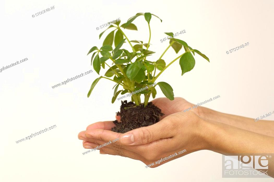 Stock Photo: Person holding seedling.