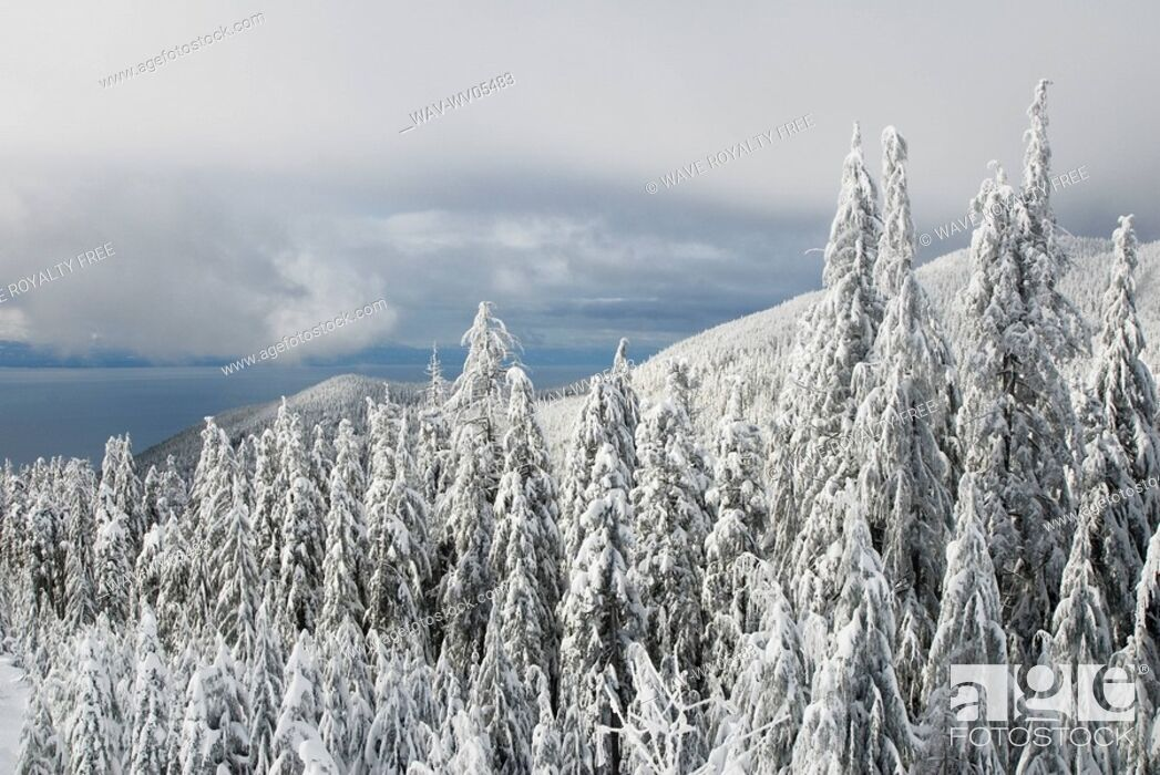 Stock Photo: Cypress Ski Resort, West Vancouver.