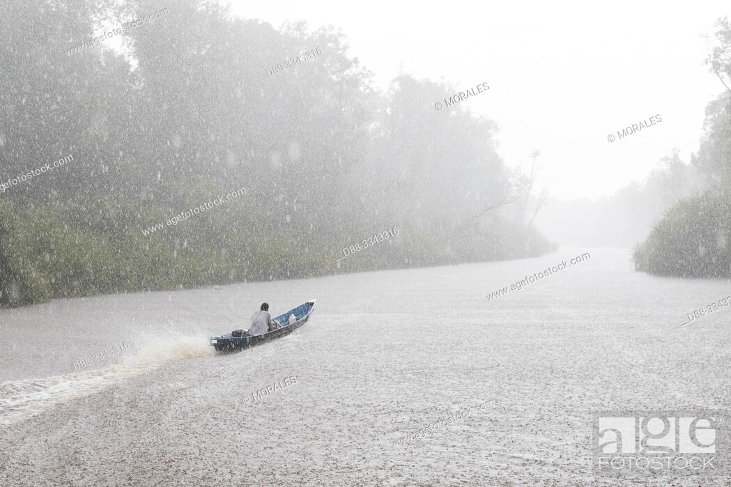 Stock Photo: Asia, Indonesia, Borneo, Tanjung Puting National Park, Sekonyer river, Rain in tropical forest.