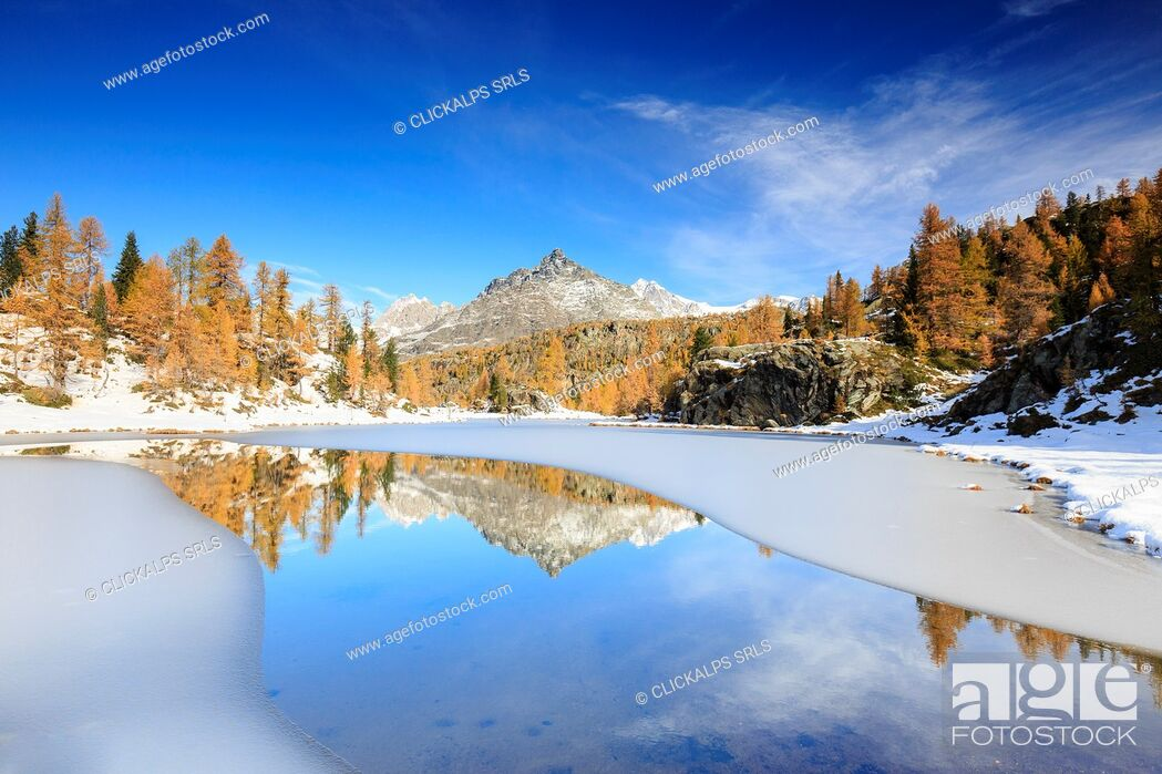 Photo de stock: Rocky peaks and larches reflected in the frozen Lake Mufulè Malenco Valley Lombardy province of Sondrio Valtellina Italy Europe.