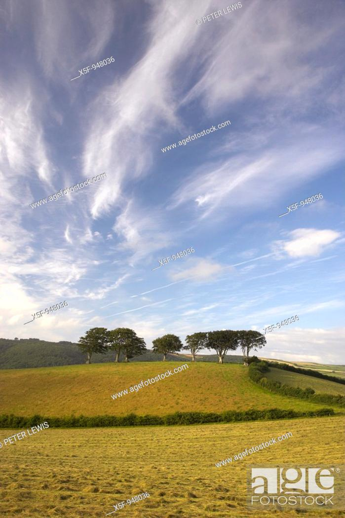 Stock Photo: Trees on a Hill Luccombe Exmoor National Park Somerset.