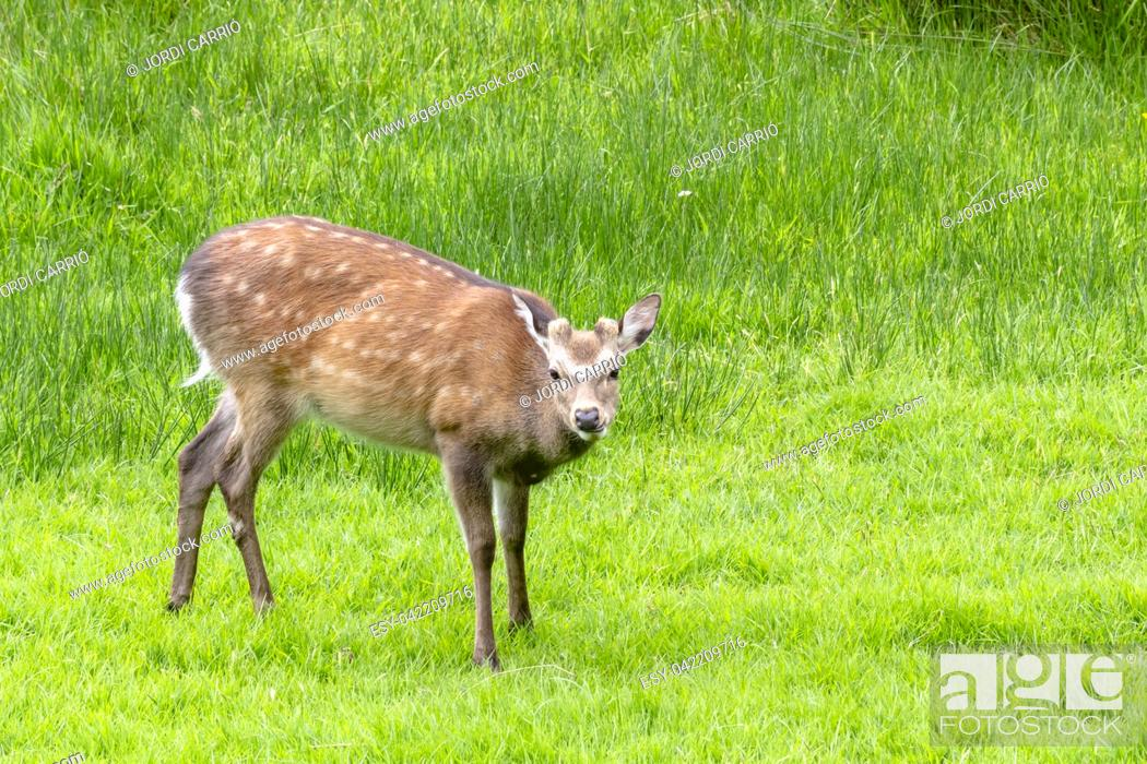 Stock Photo: Deer in the Wiclow Mountains National Park, Glendalough.