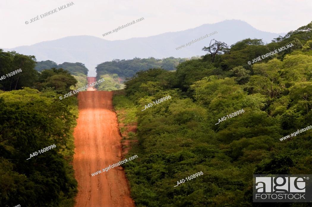 Stock Photo: Bolivia. Santa Cruz department. Road in the tropical forest in Chiquitania.
