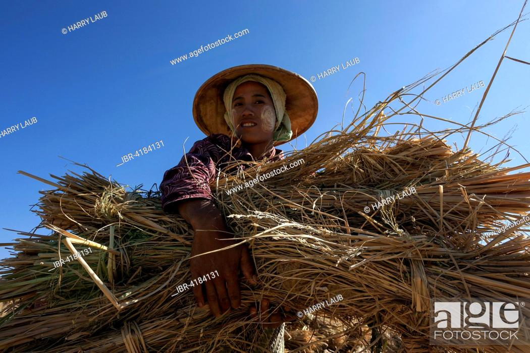 Stock Photo: Local woman from the tribe of the Poa with a bundle of rice straw, near Heho, Shan State, Myanmar.