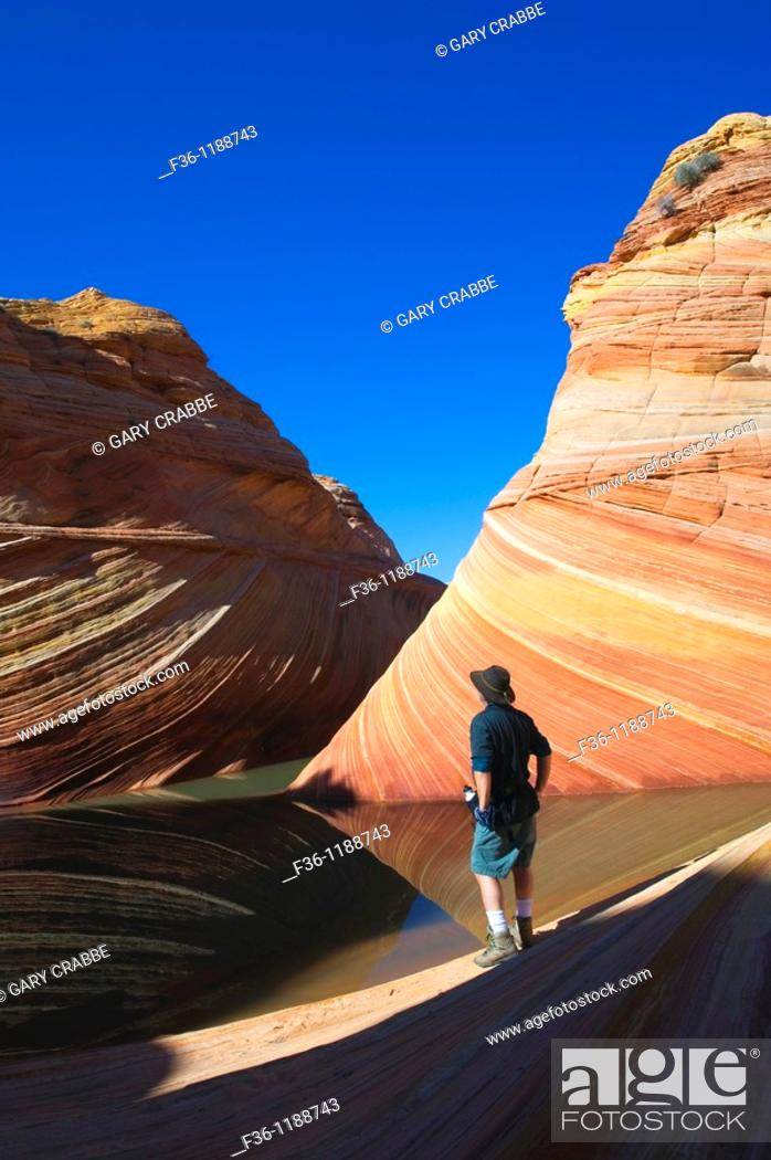 Stock Photo: Hiker next to Seasonal desert pool of water below striated sandstone at The Wave, Coyote Buttes, Paria Canyon Vermilion Cliffs Wilderness, Arizona.