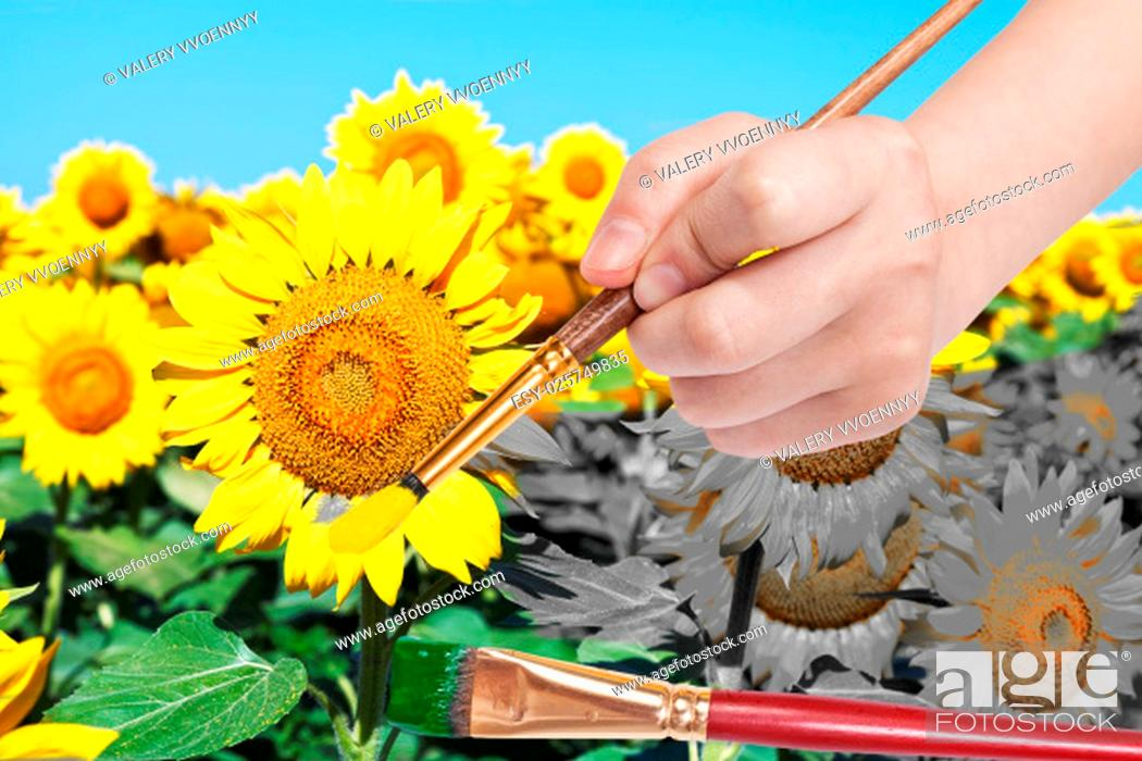 Stock Photo: harvesting concept - hand paints by paintbrush yellow petals and green leaves of sunflowers.