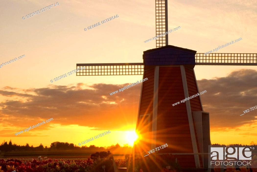 Stock Photo: Windmill sunset, Wooden Shoe Bulb Co., Clackamas County, Oregon, USA.