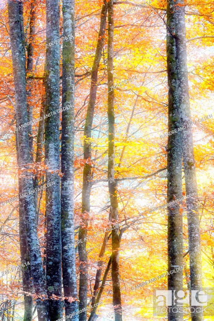 Imagen: Leaves with autumn colors in forest and double exposure, French alps, Haute Savoie, France.