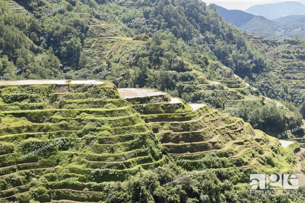 Imagen: View of the rice terraces as seen from the Banaue viewpoint, Banaue, Philippines.