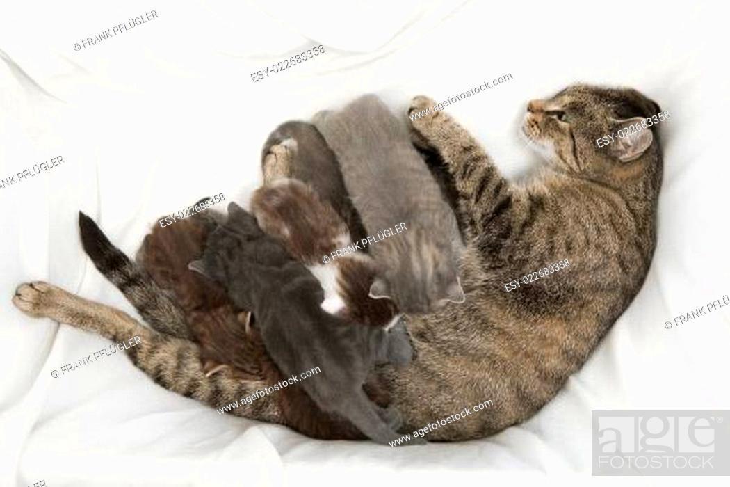 Stock Photo: cat family.