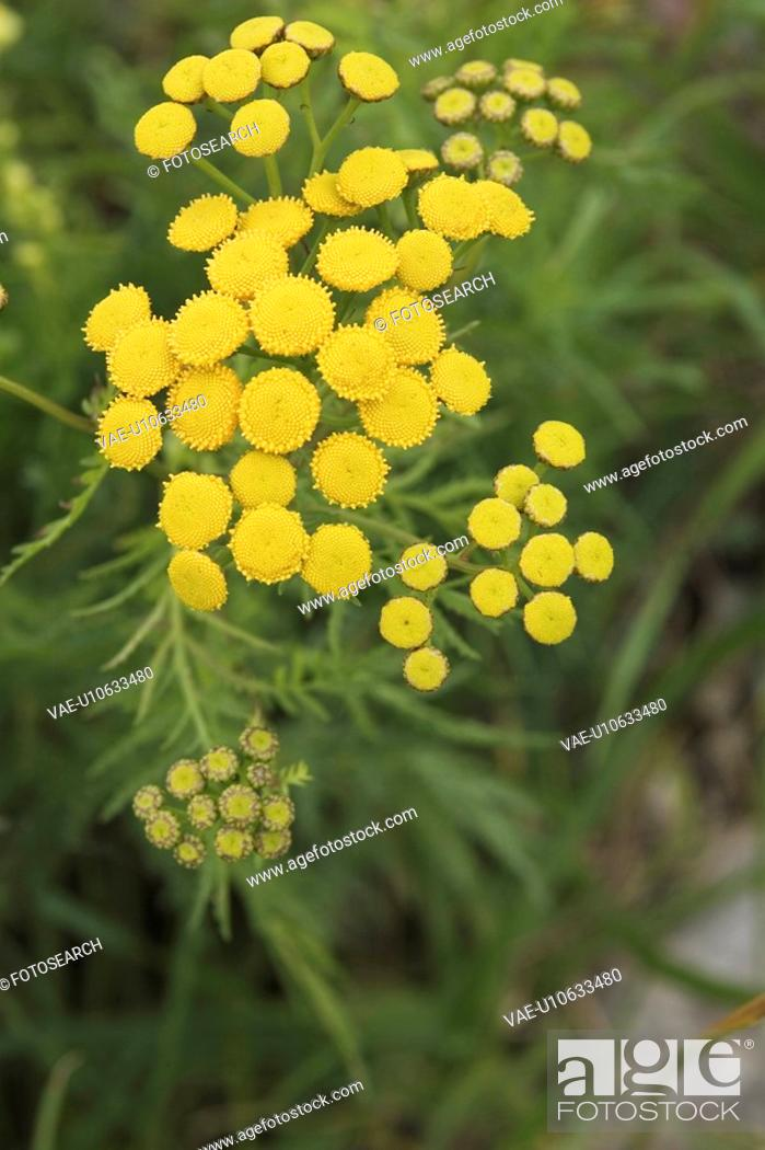 Stock Photo: Cluster, Beauty, Close-Up, Climate, Calm, Aroma.