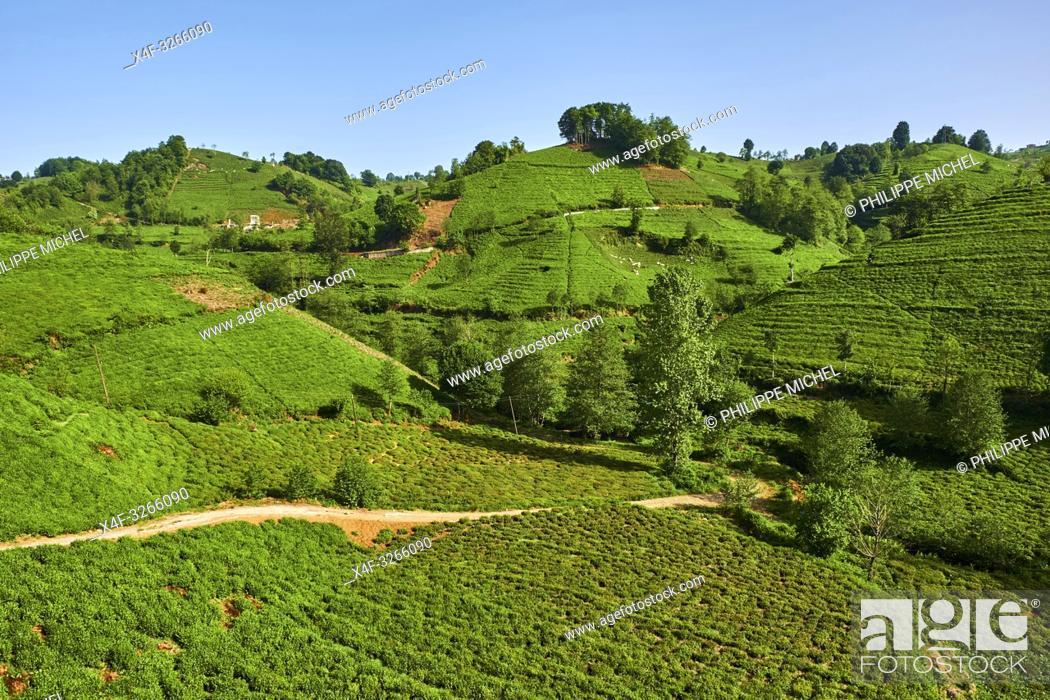 Stock Photo: Turkey, the Black Sea region, tea plantation in the hills near Trabzon in Anatolia.