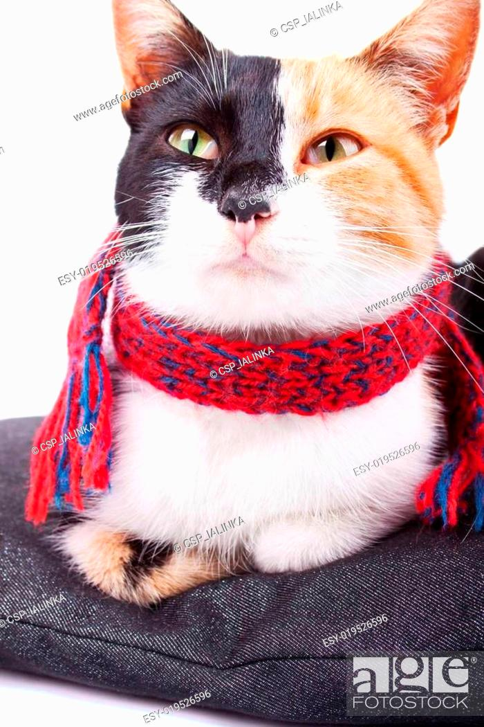 Stock Photo: Calico Cat in Red Scarf.