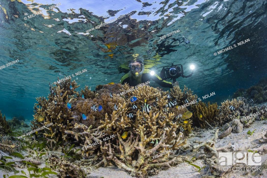 Stock Photo: photographer on the house reef at Komodo Diving Resort, Sebayur Island, Flores Sea, Indonesia.