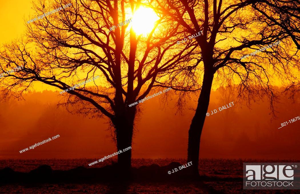 Stock Photo: Winter sunrise near Beaupouyet, Dordogne, Aquitaine, France.