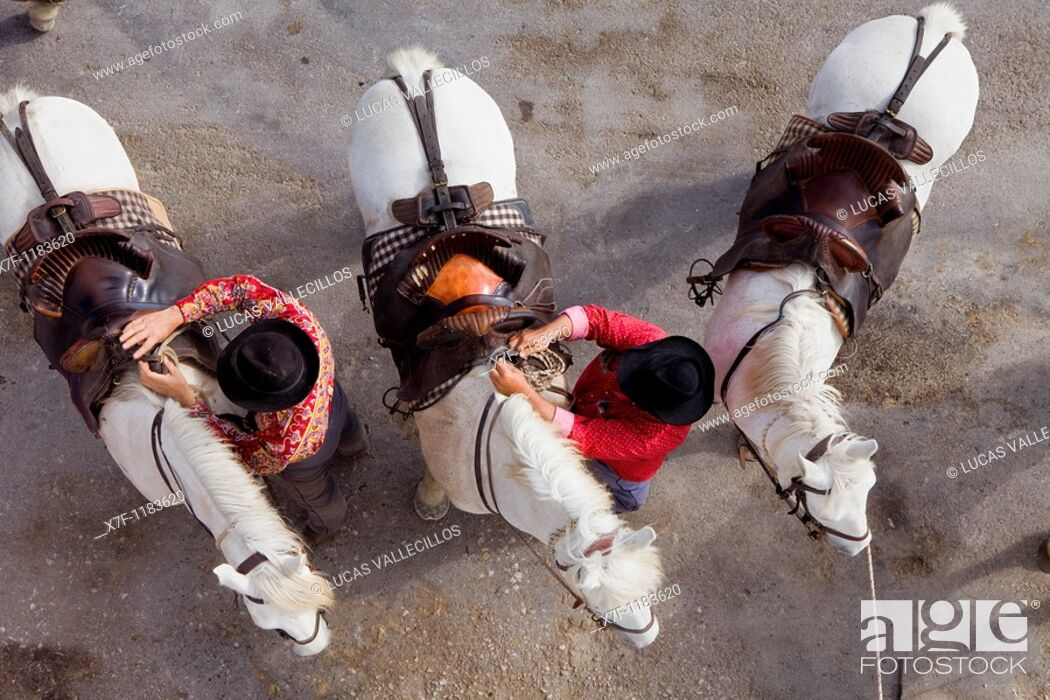 Stock Photo: Gardians horsemen that works with bull of Camargue Les Saintes Maries de la Mer,Camargue, Bouches du Rhone, France.