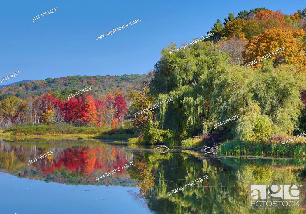 Stock Photo: Autumn, Berkshire, Massachusetts, Shakers Pond, USA, United States, America, colourful, district, lake, nature, peaceful, red, reflection, touristic, travel.