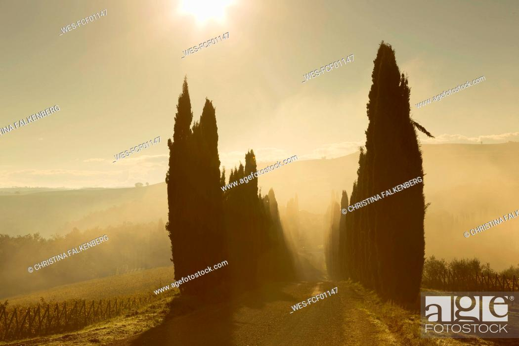 Stock Photo: Italy, Tuscany, Val d'Orcia, cypress avenue in morning fog.