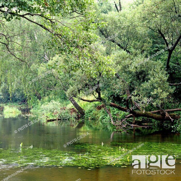 Stock Photo: Nurzec river. Podlasie region. Poland.