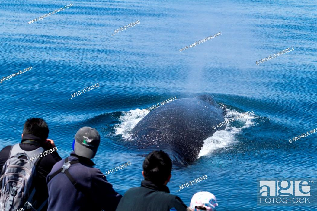 Stock Photo: Passengers watching a Humpback Whale in the Monterey Bay, Monterey, California, USA.