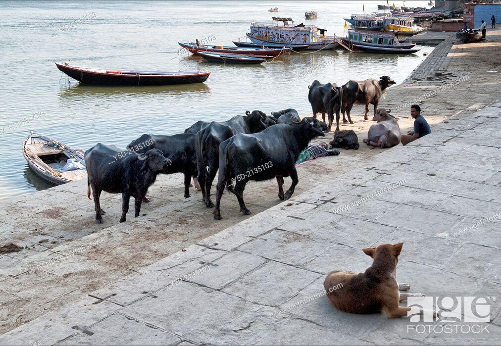 Stock Photo: Life at the bank of Ganges river, Varanasi, India.
