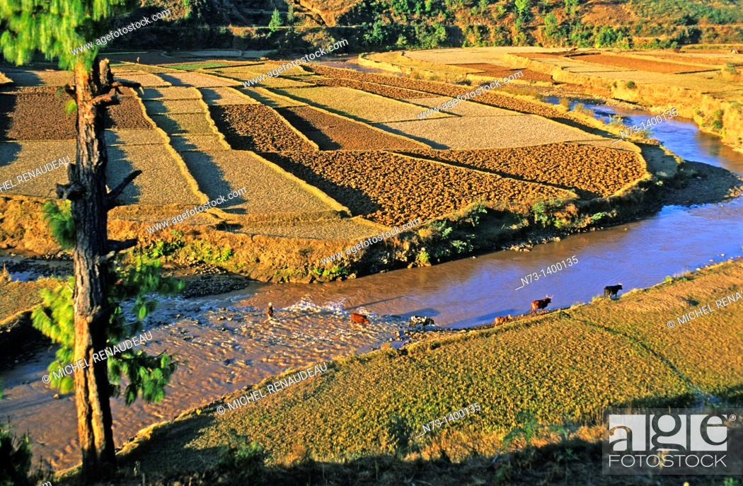 Stock Photo: Africa, Madagascar, Les Hauts Plateaux and road N°7 Terrace cultivation.