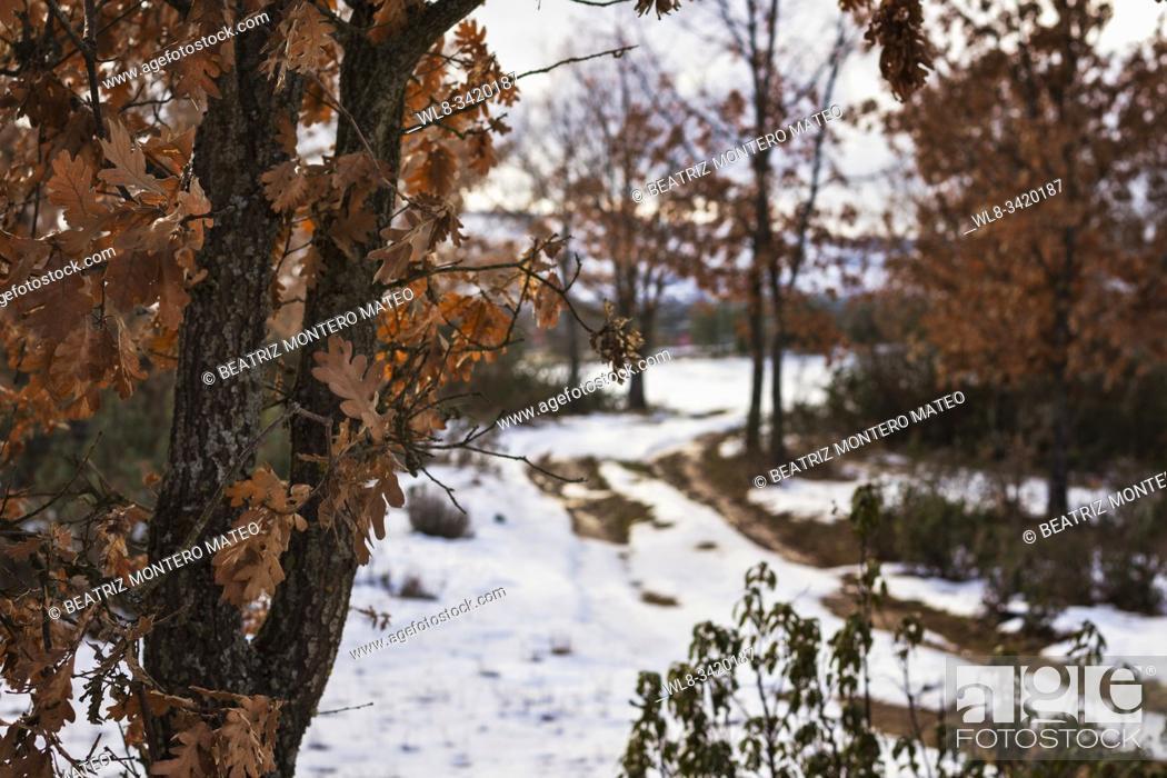 Stock Photo: Snowy land road in Salas de los Infantes, Burgos (Spain).