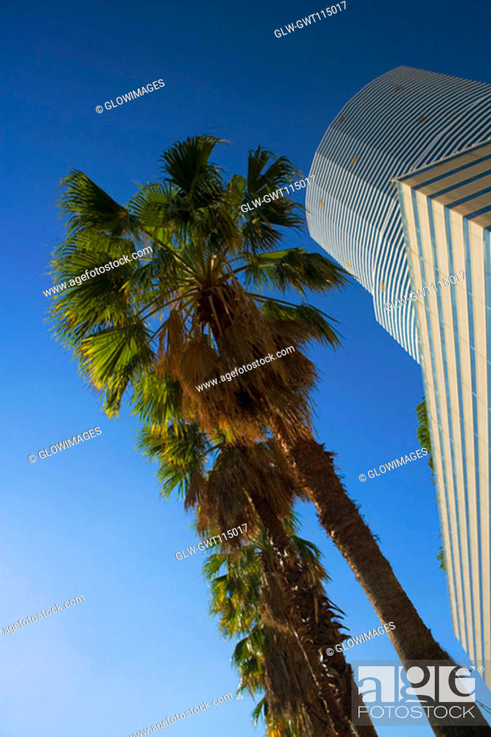 Stock Photo: Low angle view of a tree in front of a building, Miami, Florida, USA.