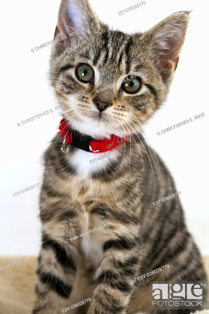 Stock Photo: Cute wided eyed kitten looking at the camera.