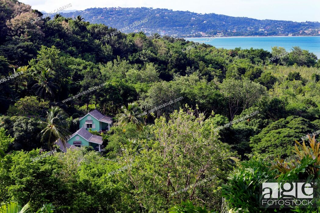 Stock Photo: Small wooden house in the middle of the jungle with La Tuc Bay and Castries in the background, St Lucia, Windward Islands, Lesser Antilles.