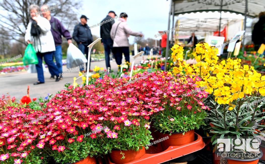 Blooming Plants Can Be Seen At The Garden Market Du Und Dein