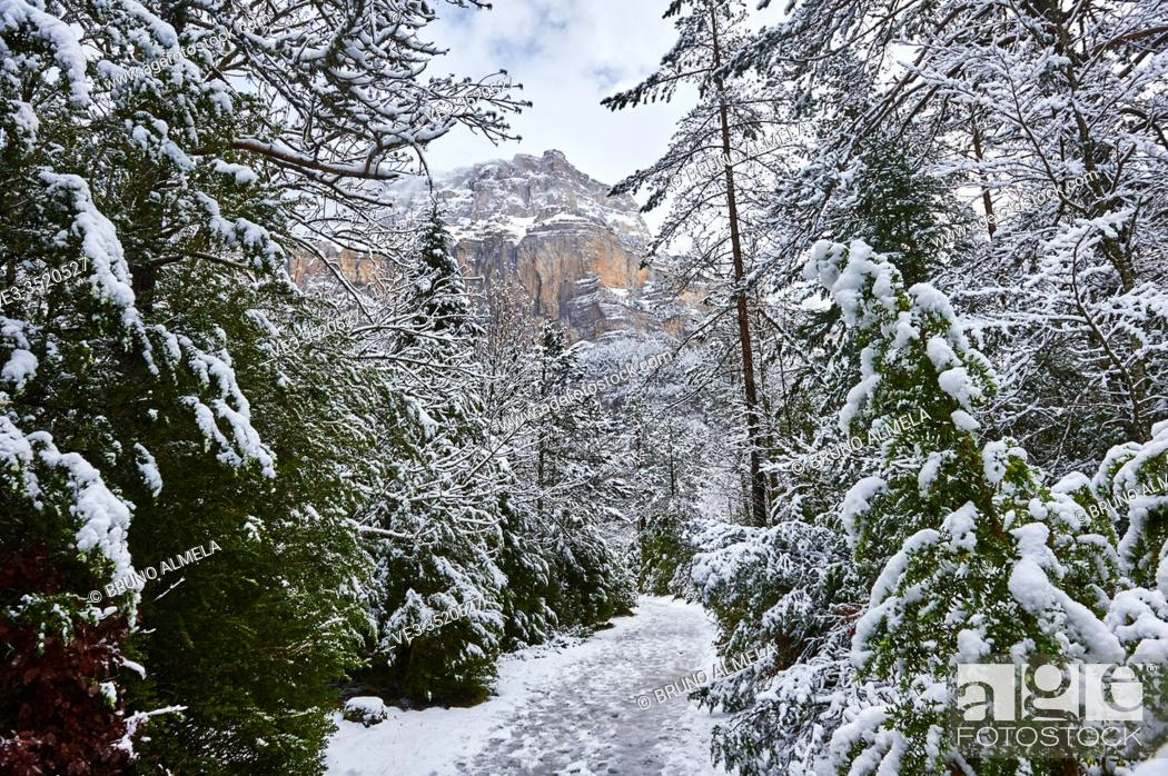Stock Photo: Pyrenees: Snowy path in the National park of Ordesa and Monte Perdido (Huesca province, Aragon region, Spain).