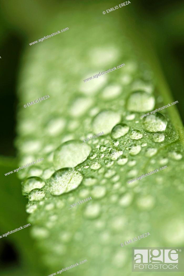 Stock Photo: Droplets on leaf.