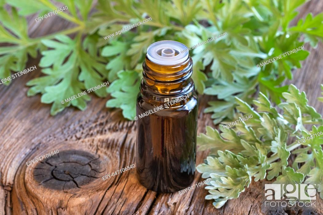 Stock Photo: A bottle of wormwood essential oil with fresh Artemisia Absinthium plant.