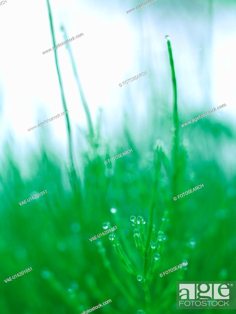 Stock Photo: waterdrop, grass, plants, plant, film.