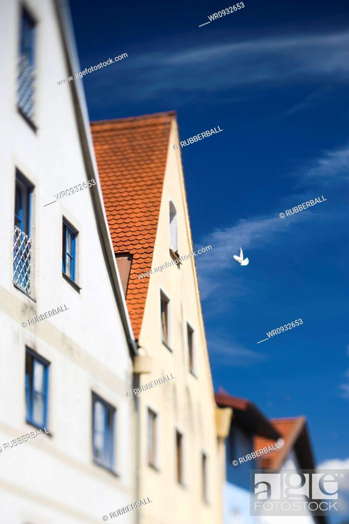 Stock Photo: Building and dove.