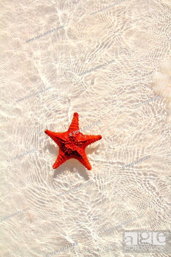 Stock Photo: beautiful starfish orange in wavy shallow water.