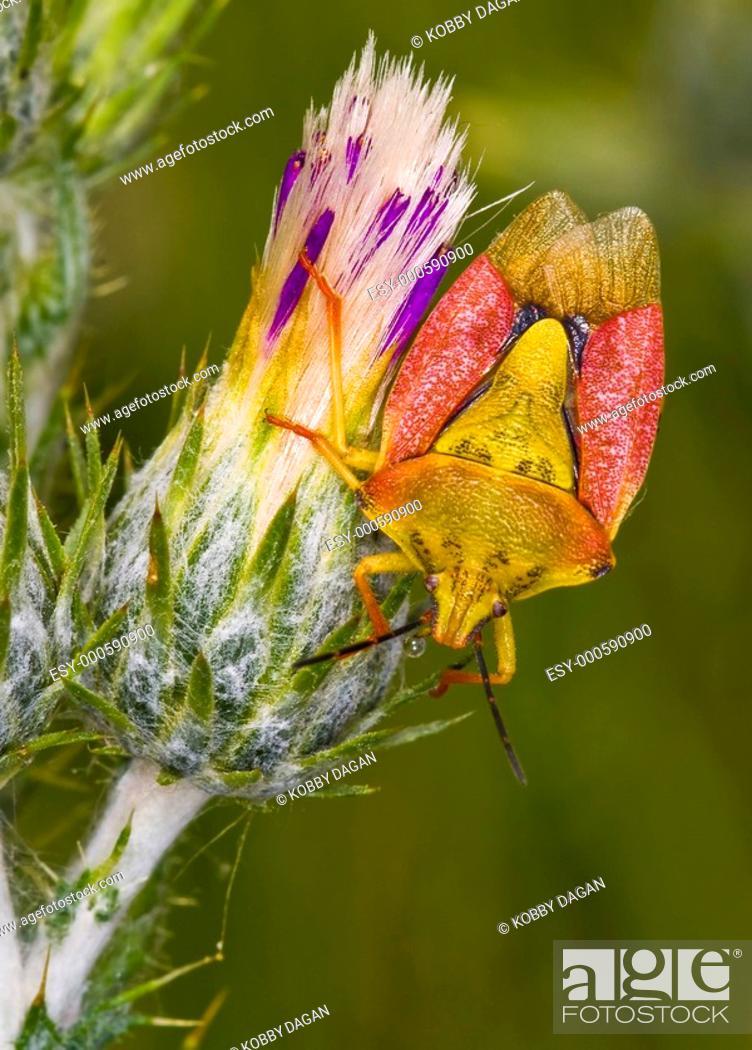 Stock Photo: Bug.