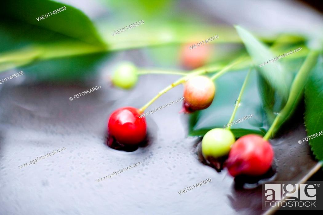 Stock Photo: Amelanchier spp.