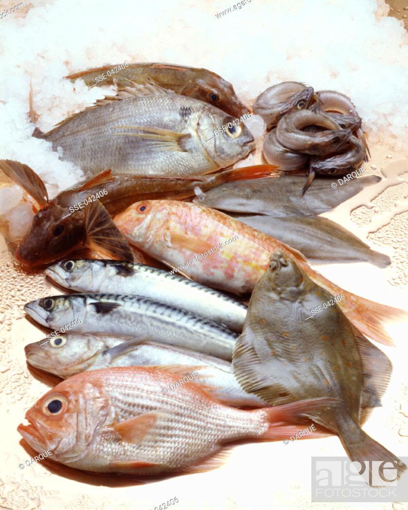Photo de stock: Selection of fresh fish.