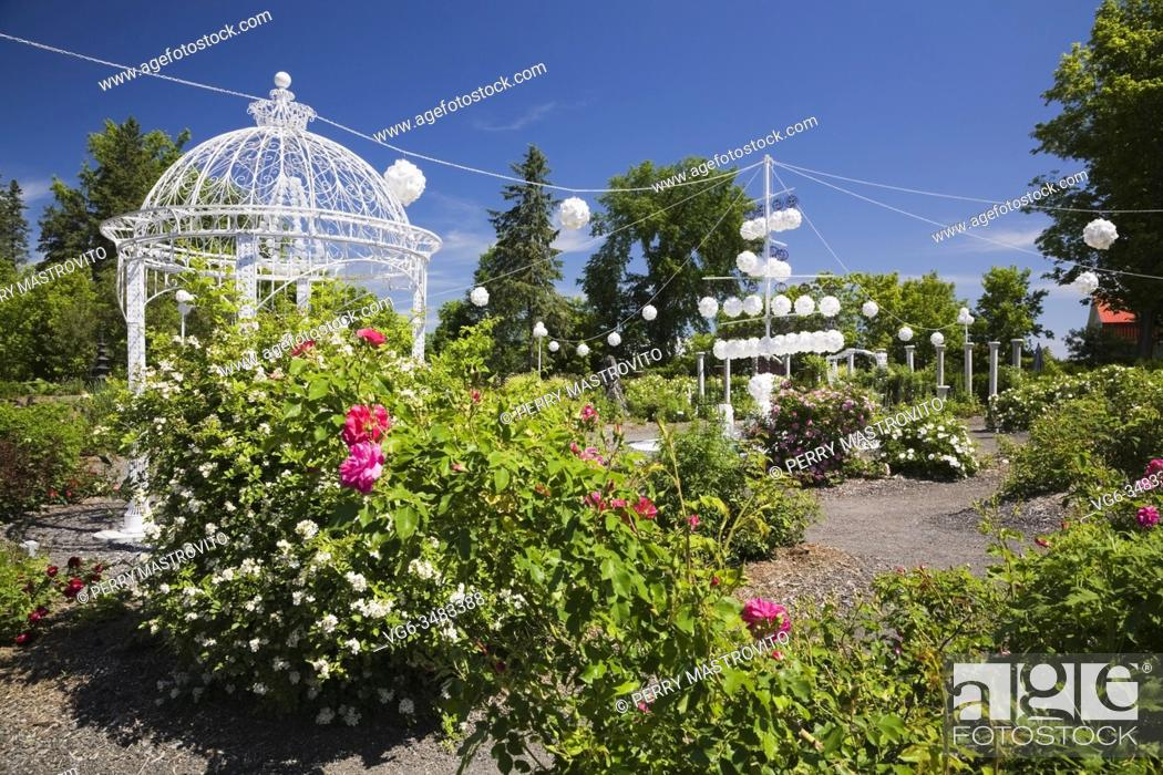 Stock Photo: Pink Rosa 'George Vancouver' and White Grootendorst' - Rose bushes with white painted wrought iron metal gazebo in late spring in the Rose Garden at the Route.