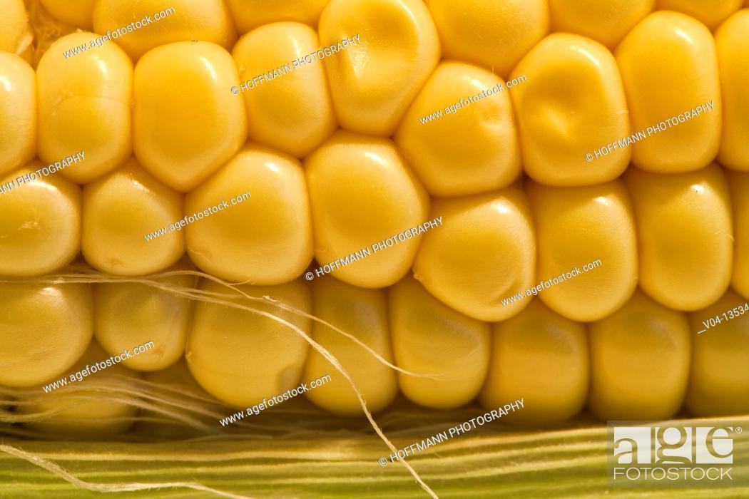 Stock Photo: Close up of a corn cob.