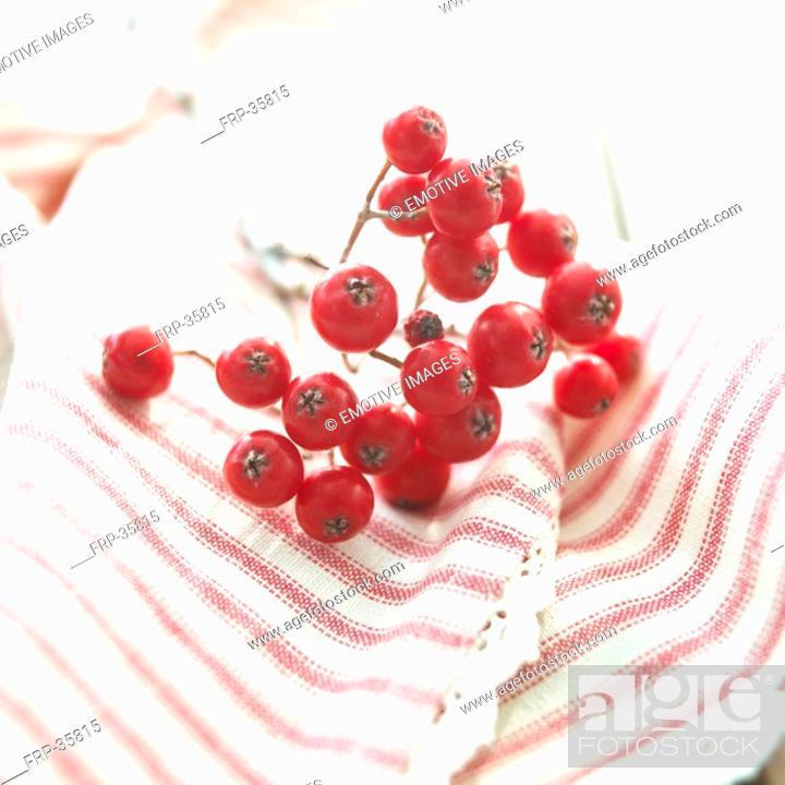 Stock Photo: rowan berries on towel.
