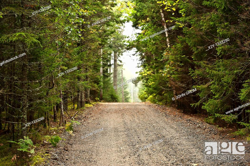 Stock Photo: Unpaved road through evergreen forest, Maine, USA.