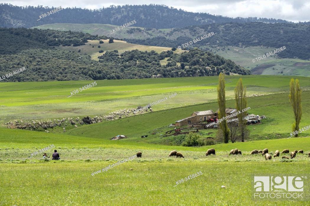 Stock Photo: Agelman Ou Haoul, parque nacional Ifran, Atlas Medio, Marruecos, Africa.