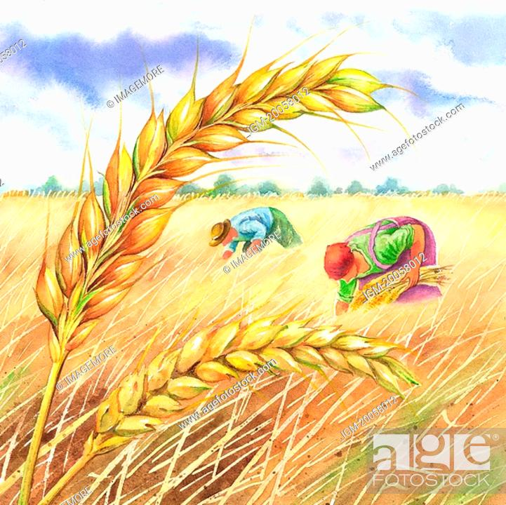 Stock Photo: Flower, Watercolor painting of famers working with ear of wheat.