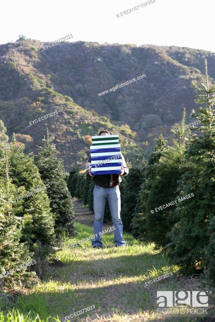 Stock Photo: Young man holding gift boxes in field of Christmas trees.