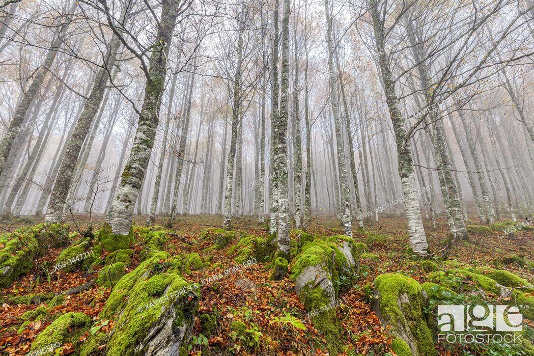 Stock Photo: Selva de Irati forest near Orbaiceta, Navarra, Spain.